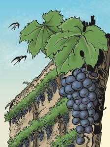 affiche GAL vignes hirondelles